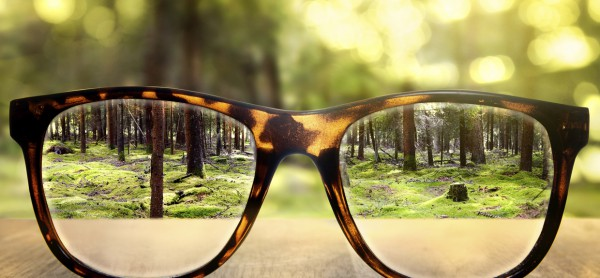TRANS-glasses-and-woods